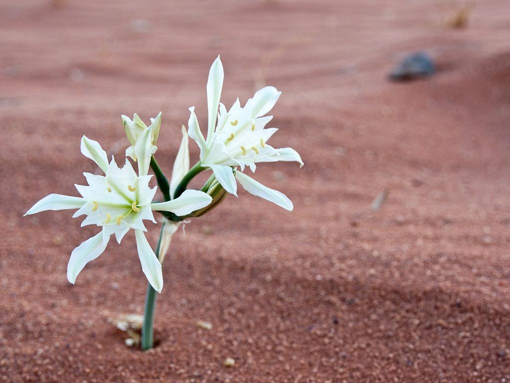 03_Weisse-Blume-im-Sand
