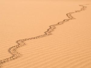 15_Spuren-im-Sand
