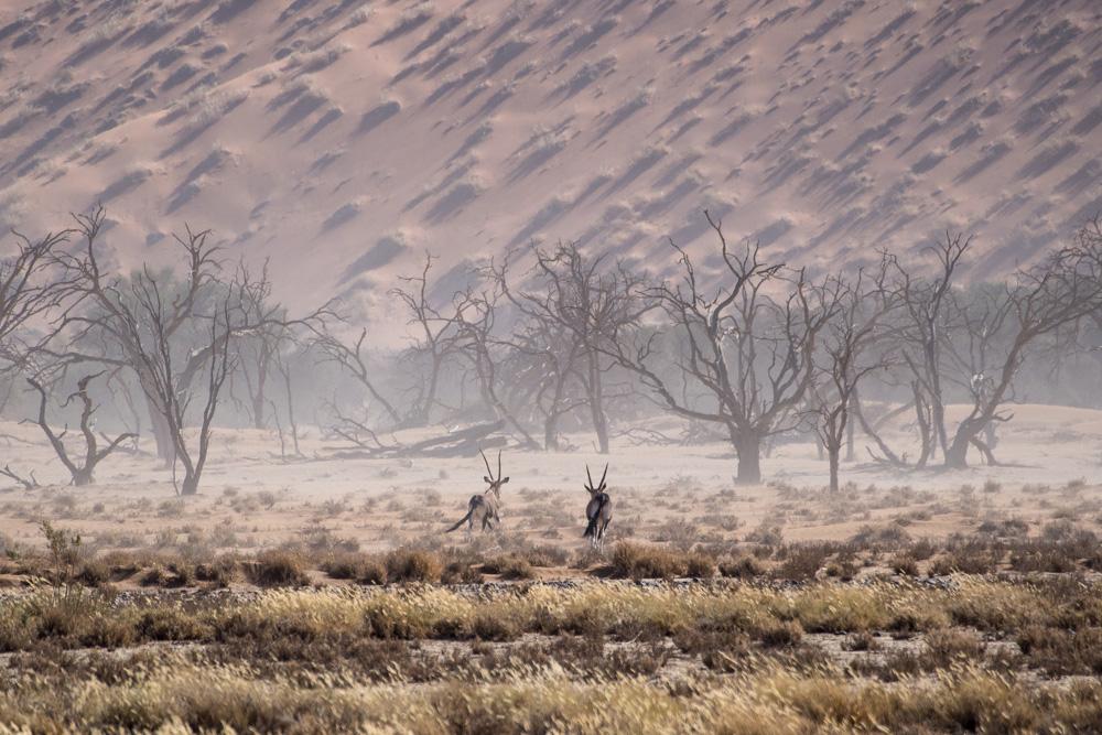 20_Sandsturm-mit-Oryxen