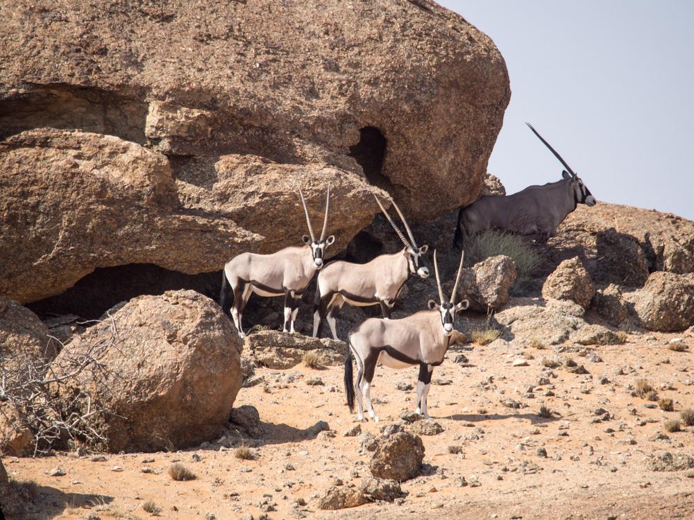 21_Gruppe-Oryxe