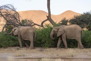 40_Elefanten-im-Trockenflussbett