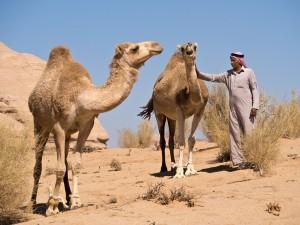 46_Beduine-mit-Kamelen