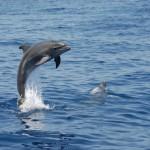 Delfin II, LaMar Reiseportal