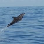 Delfin III, LaMar Reiseportal