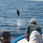 Delfin vorm Bug, LaMar Reisevermittlung