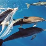 Delfine am Bug, LaMar Reisevermittlung