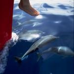 bugwellenreitende Delfine, LaMar Reisevermittlung